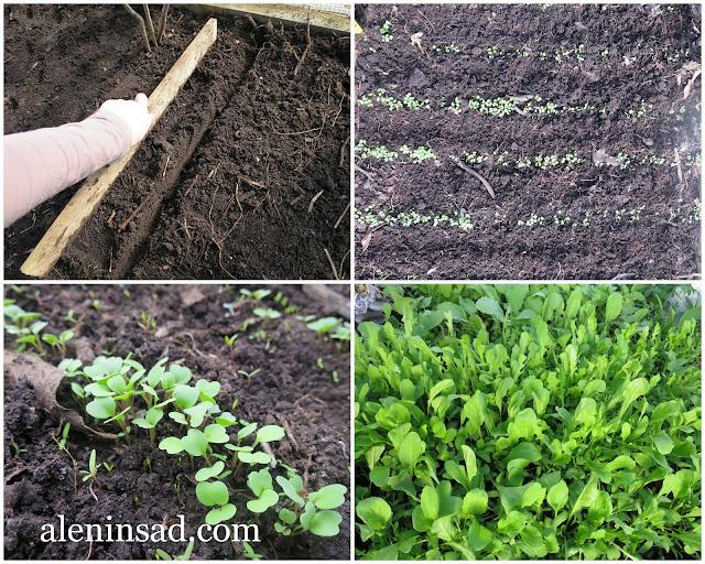 бороздки, лунки, канавки, дощечка, брусок, с помощью, как сделать, простой способ, правильные бороздки, для семян, семена, посев, посадка, лук-севок, чеснок, редис, всходы, руккола, в теплице, аленин сад
