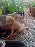Briar and Basil in the Greenhouse