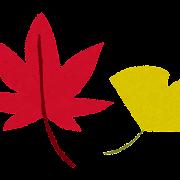 紅葉のイラスト「赤いもみじと黄色いイチョウ」
