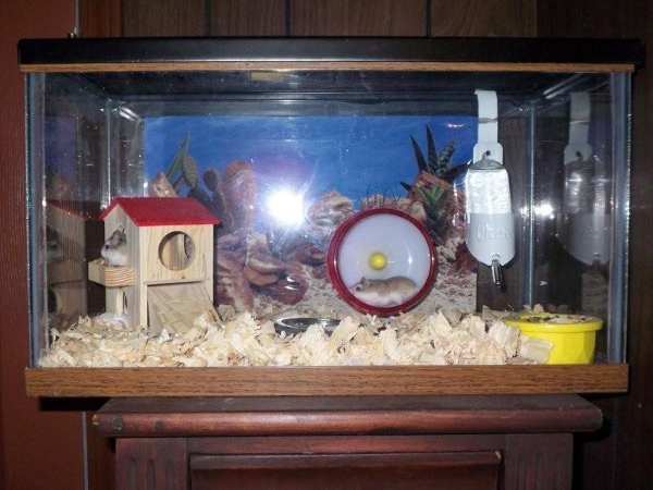 dwarf hamster homes