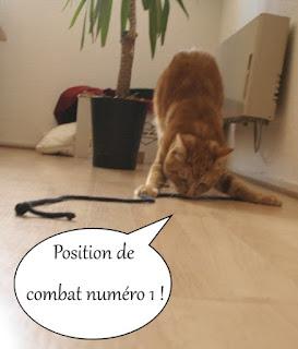 Lionel, chat roux chasse un lacet.