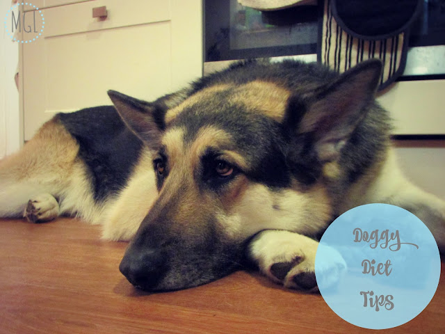 My General Life | Doggy Diet Tips