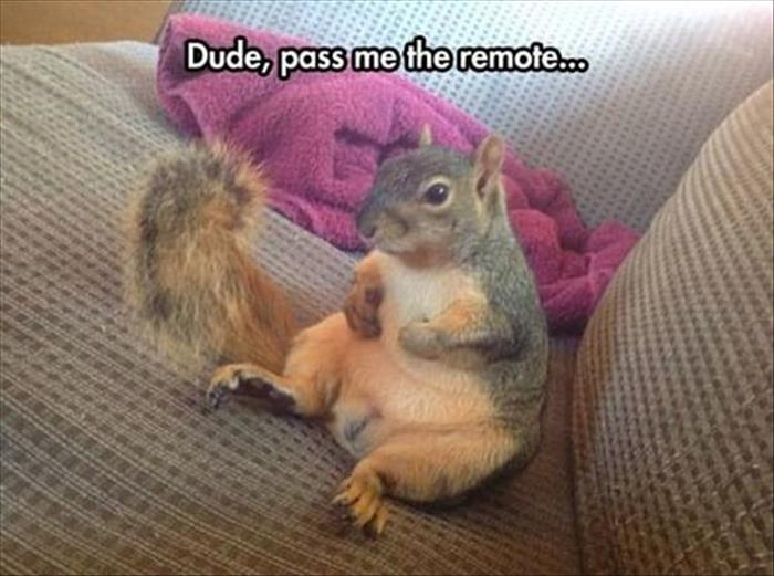 30 Funny animal captions - part 41, animal pictures with funny sayings, animal photos with captions, captioned animal pictures