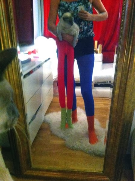 одетые коты