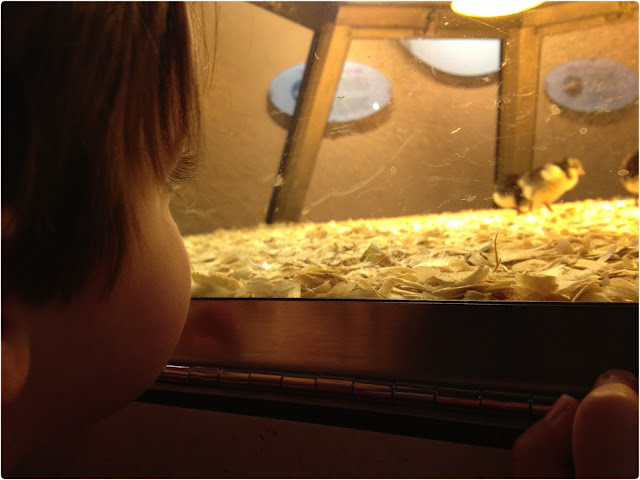 Checking out the chicks at MSI