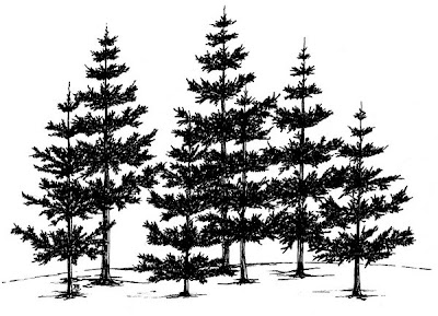 Pine Tree Silhouette Drawing