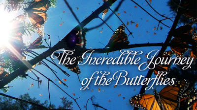 The Incredible Journey of the Butterflies, NOVA, PBS