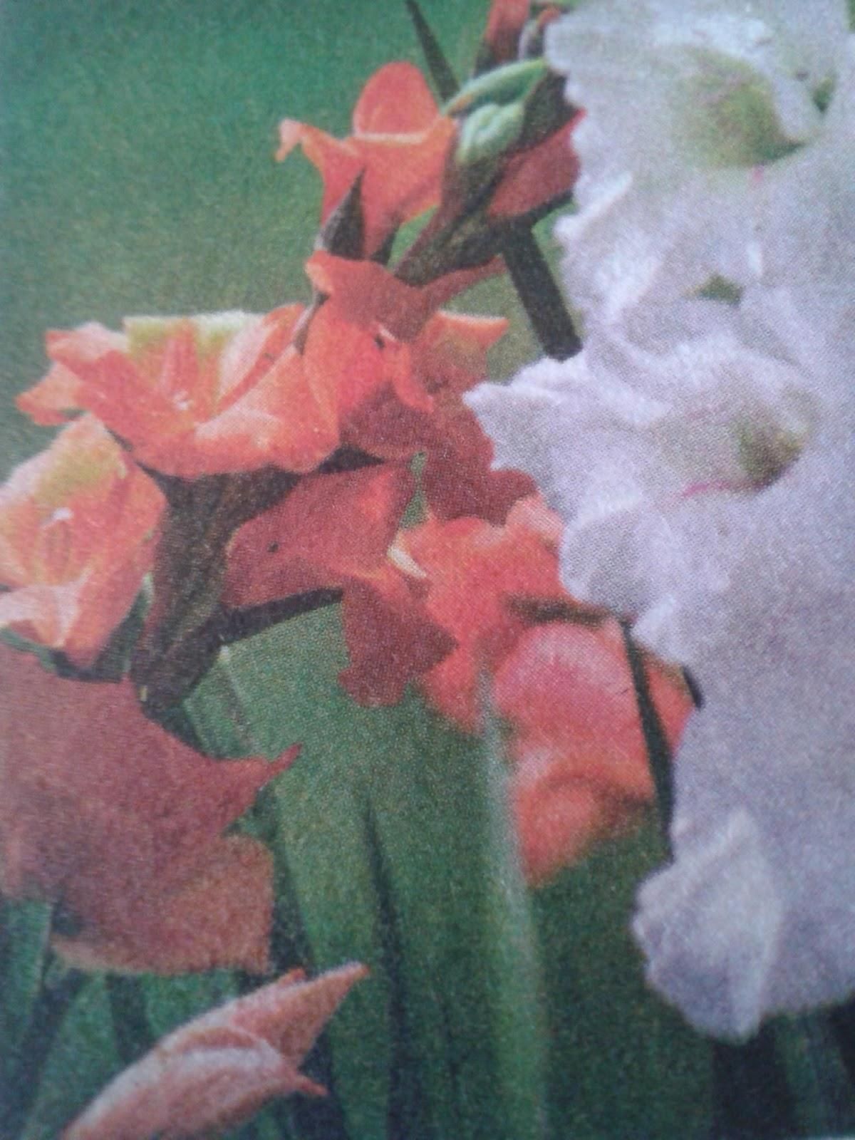 Patlıcanın En Hafif, Leziz Hali: Patlıcan Buğulama Kolay Yemek Tarifleri 2. Bölüm Tarif Dergisi 92