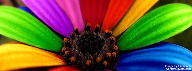 """<img src=""""http://4.bp.blogspot.com/-ynO5gZkcY5I/UfW7KR-UbEI/AAAAAAAAC_Q/SCvjpAn-iwE/s1600/colorful_flower-2472.jpg"""" alt=""""Flower Facebook Covers"""" />"""