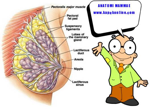 Ca / Cancer / Kanker / Carsinoma / Tumor Mammae