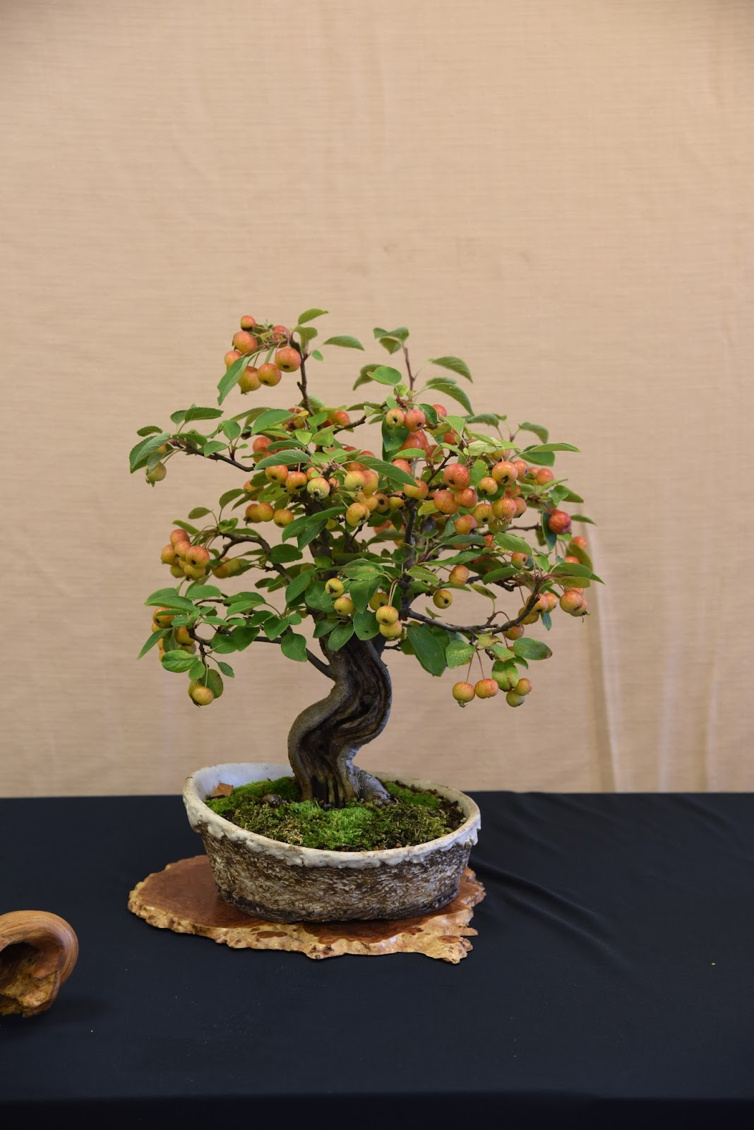 ChalkBonsai October 2015