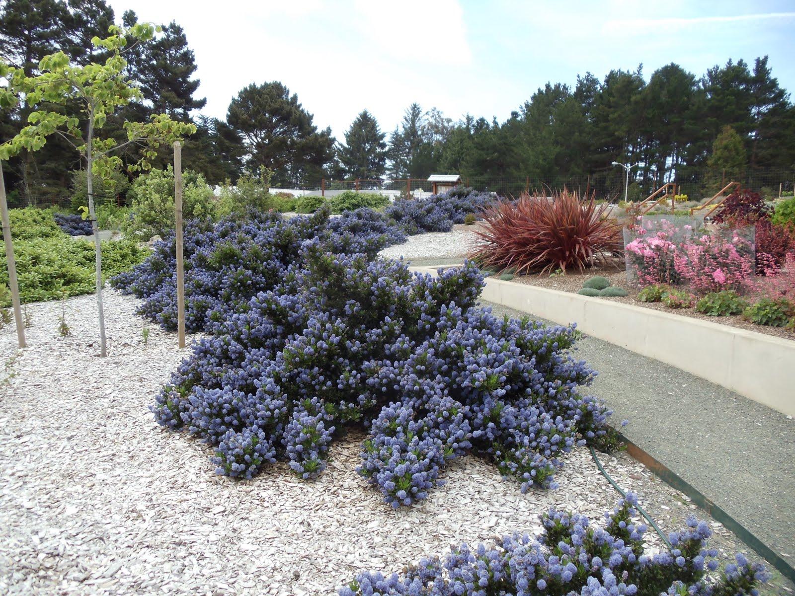 Landscapes gardens design humboldt botanical gardens lost for Botanical garden designs