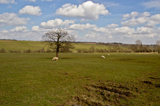 Harewood House Countryside
