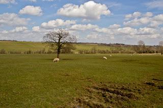Harewood House Countryside