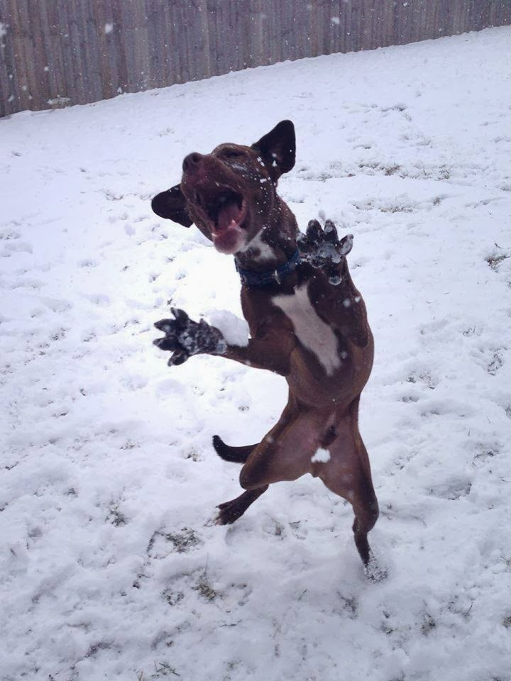 Cute dogs - part 7 (50 pics), dog loves playing in the snow
