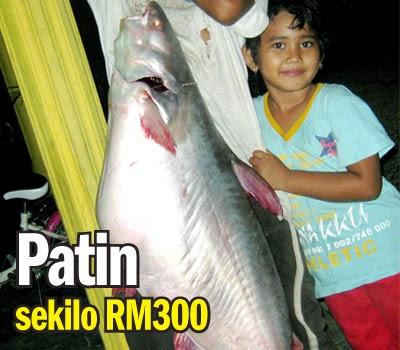 Umpan Ikan Patin, resepi Umpan Ikan Patin, Umpan Ikan Patin terbaik