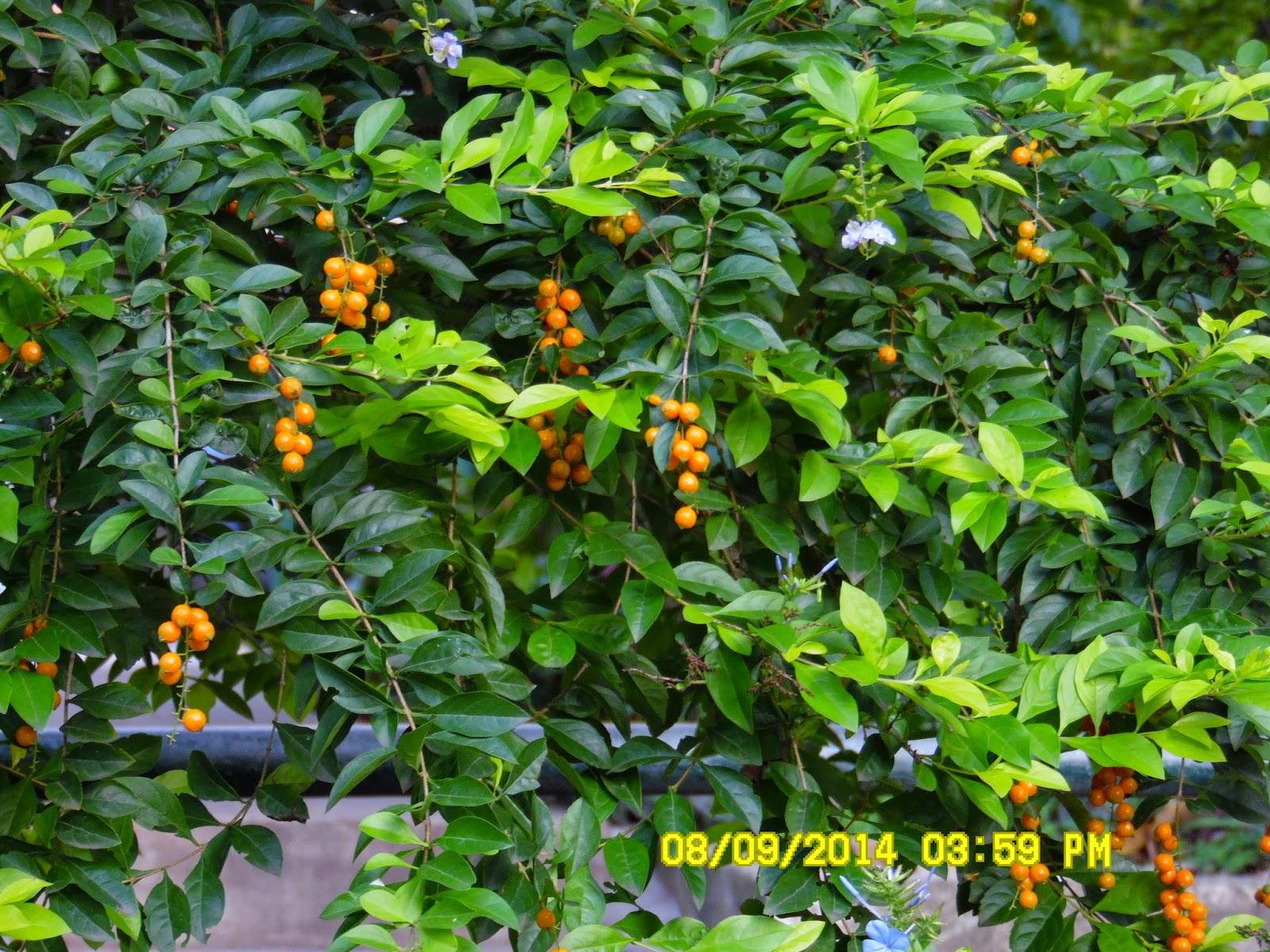 Rboles de san pedro - Recuperar jardin seco ...