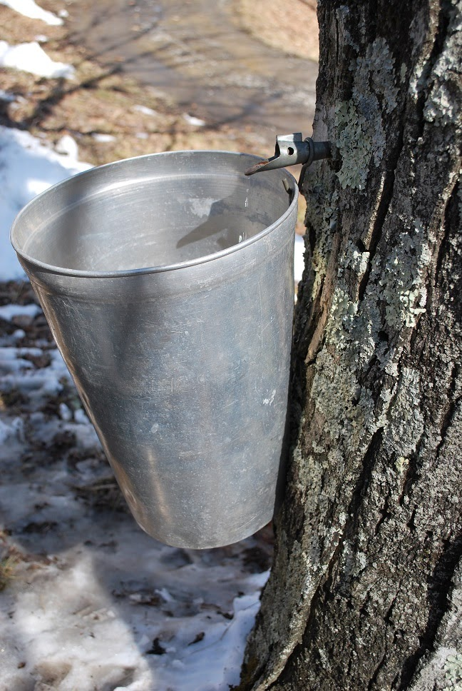 Just the right size sugar shack the maple festival featured several sugar shacks that demonstrated how to make maple syrup to make syrup excess water is boiled away from the sap ccuart Image collections