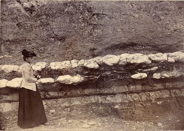 Penarth-Lavernock. Sections of Penarth Beds, etc., from Penarth Head to Lavernock. 1892. Photograph by C.J. Watson. From the British Association for the Advancement of Science photograph collection.