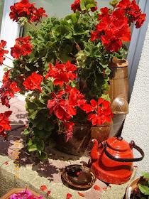 Lato mieszka w kwiatach...