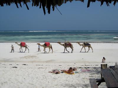 (Kenya) - Visiting Mombasa