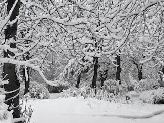 Վանաձոր ապրիլյան ձմեռ