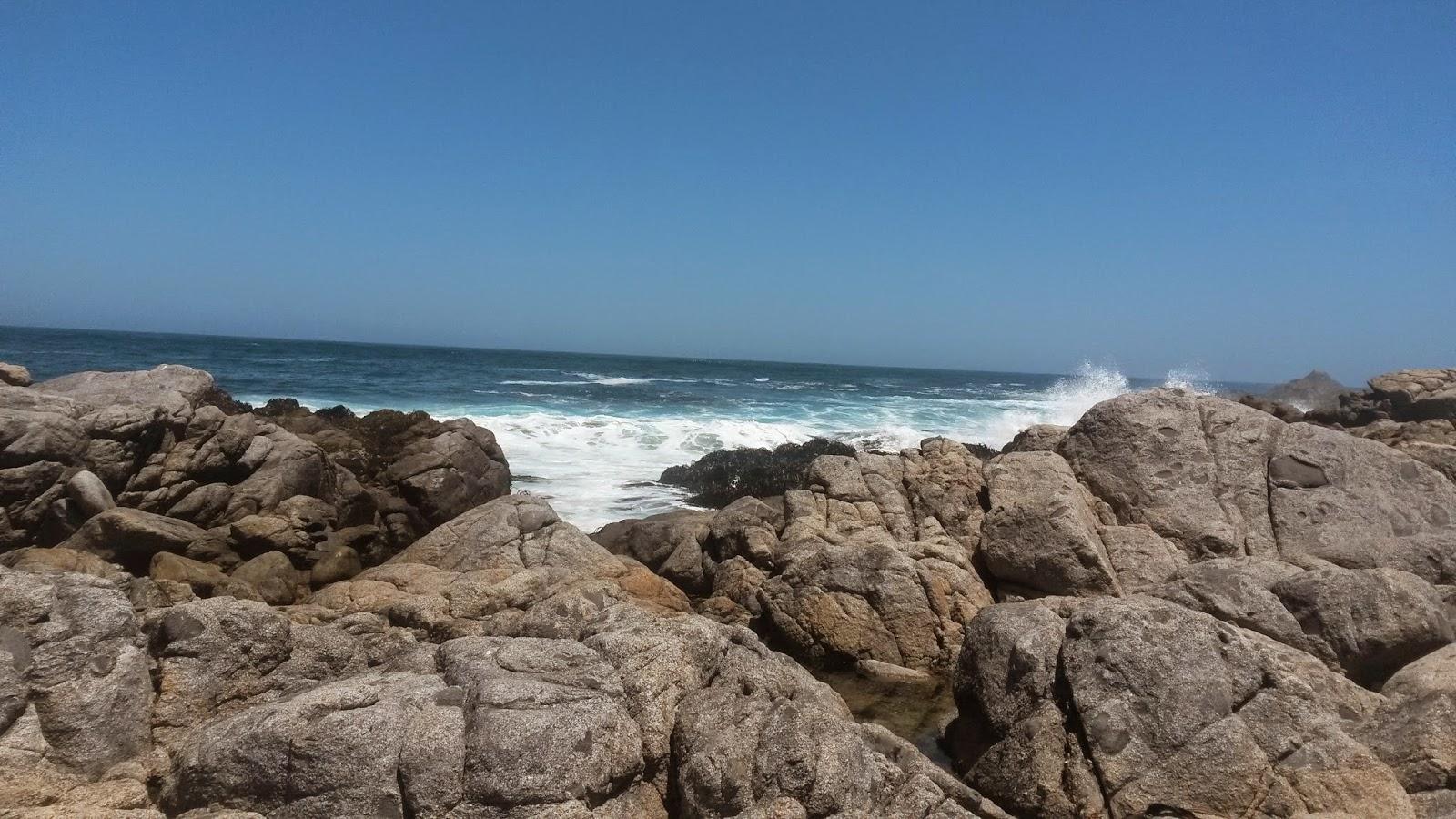 onde-alghe-oceano-pacifico