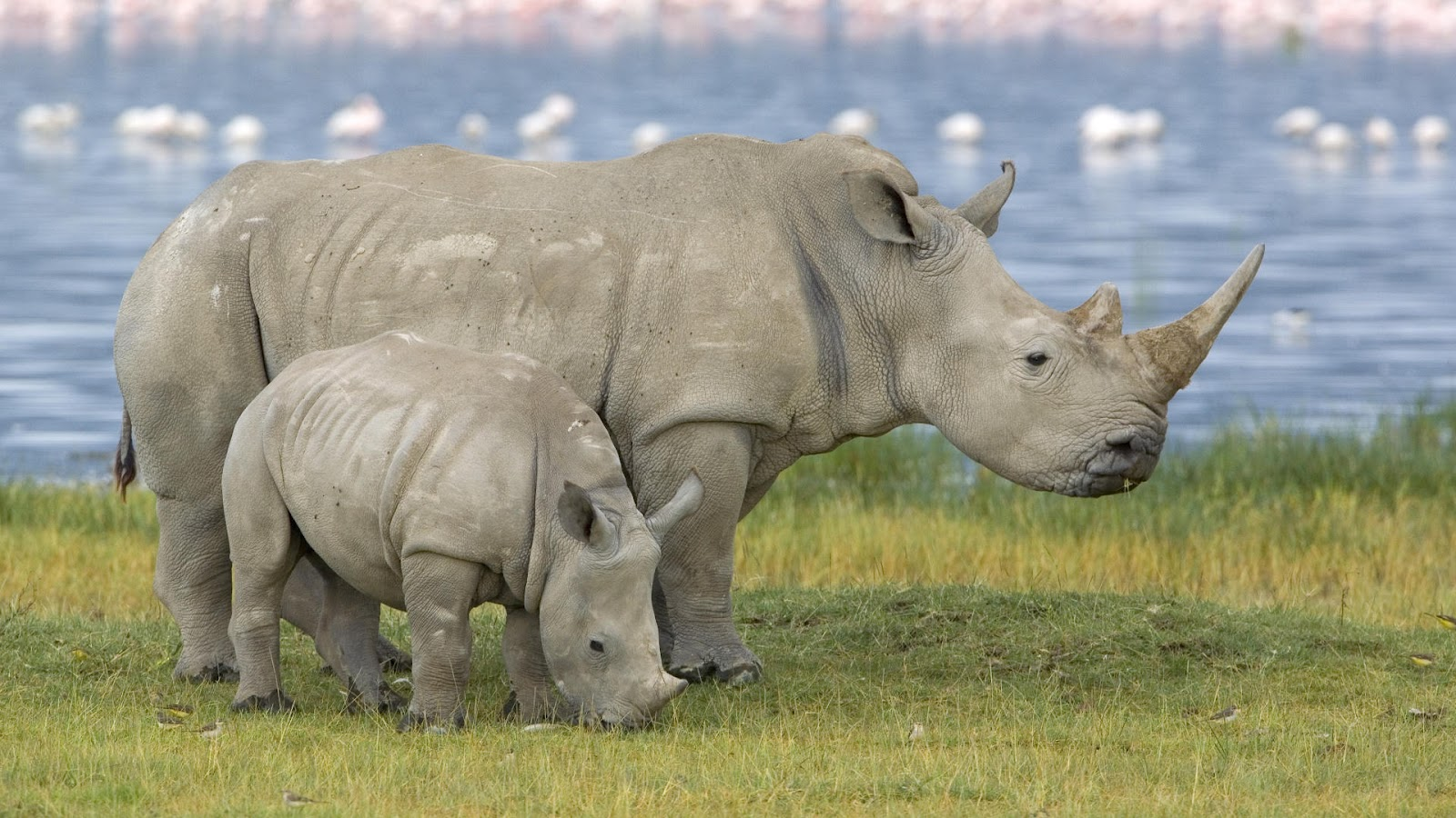 N White Rhino White Rhino | The Life...