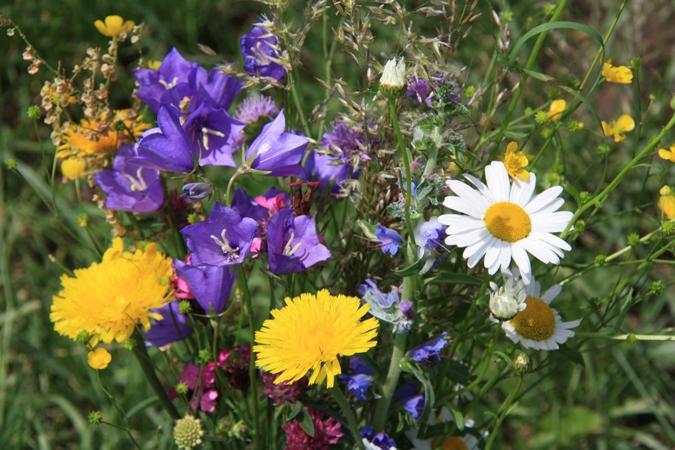 Však sú tie lúčne kvety nádherné!
