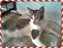 my cat,..:)...ucuk
