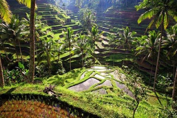 Todos Los Sitios Bali Para So Terrenal