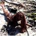 Incrível: Sereia encontrada morta na praia após tsunami