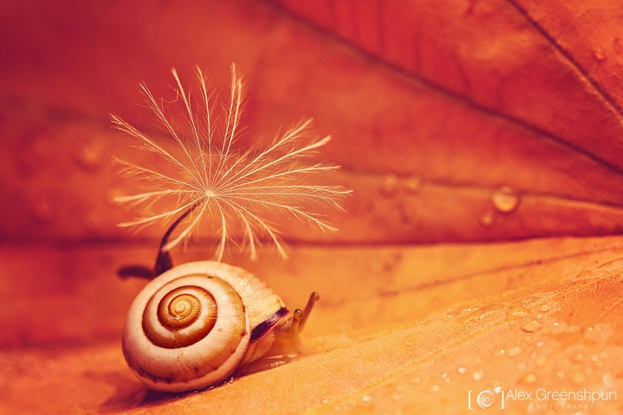 Snail naturalistic photograph