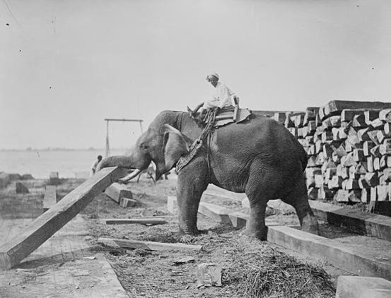 george orwells essay shooting an elephant