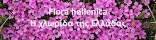 Flora hellenica Η χλωρίδα της Ελλάδας