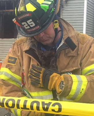 foto petugas pemadam kebakaran menyelamatkan seekor anak kucing dari kebarakan