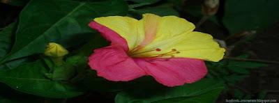 photo de couverture journal facebook fleurs