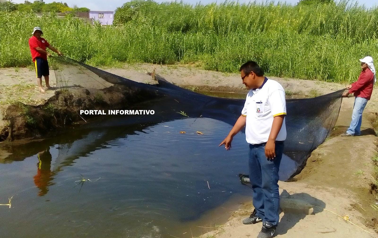 Portal informativo direpro avanza con proyecto piloto de for Criadero de peces en casa