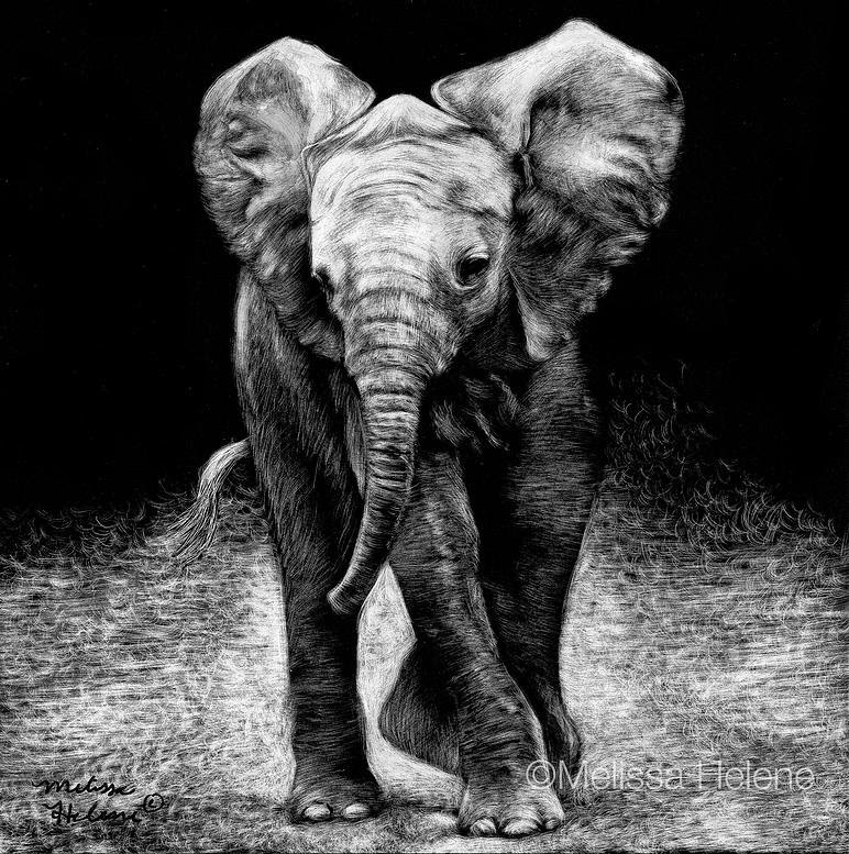 20-Elephant-Melissa-Helene-Amazing-Expressions-in-Scratchboard-Animal-Portraits-www-designstack-co