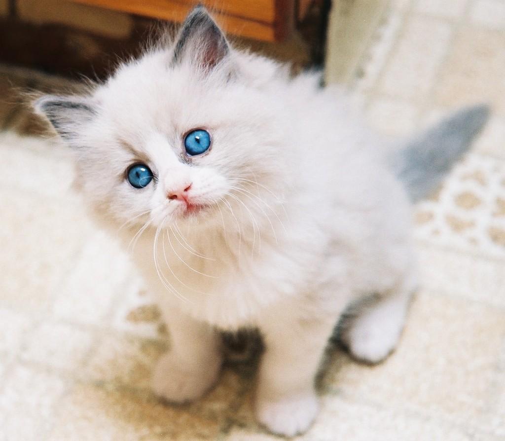 Fotos de gatinhos fofos #9
