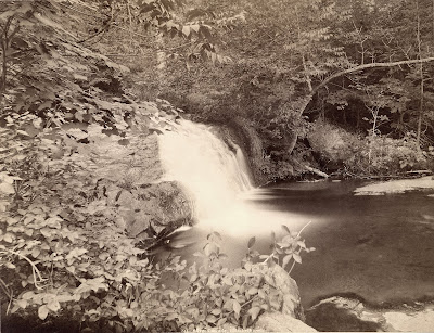 Stoddard's Natural Views Exhibit Opeing May 4th