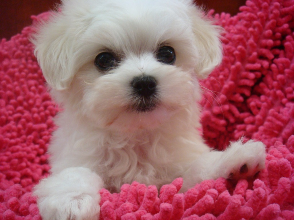 puppy love puppy of the day sectember 5