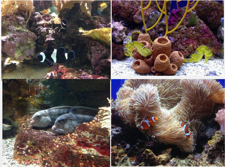 Birch Aquarium Free Admission