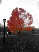 Autumn in Central Park (img)
