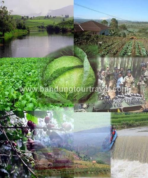 pangalengan, perkebunan pangalengan, wisata alam di pangalengan, tour pangalengan