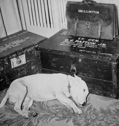 Willie, esperando junto a las pertenencias de Patton