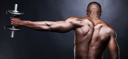The Fact About Developing Large Muscle