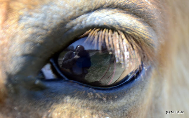 Self Picture Through the Eye of a Horse
