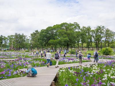 水元公園 菖蒲池