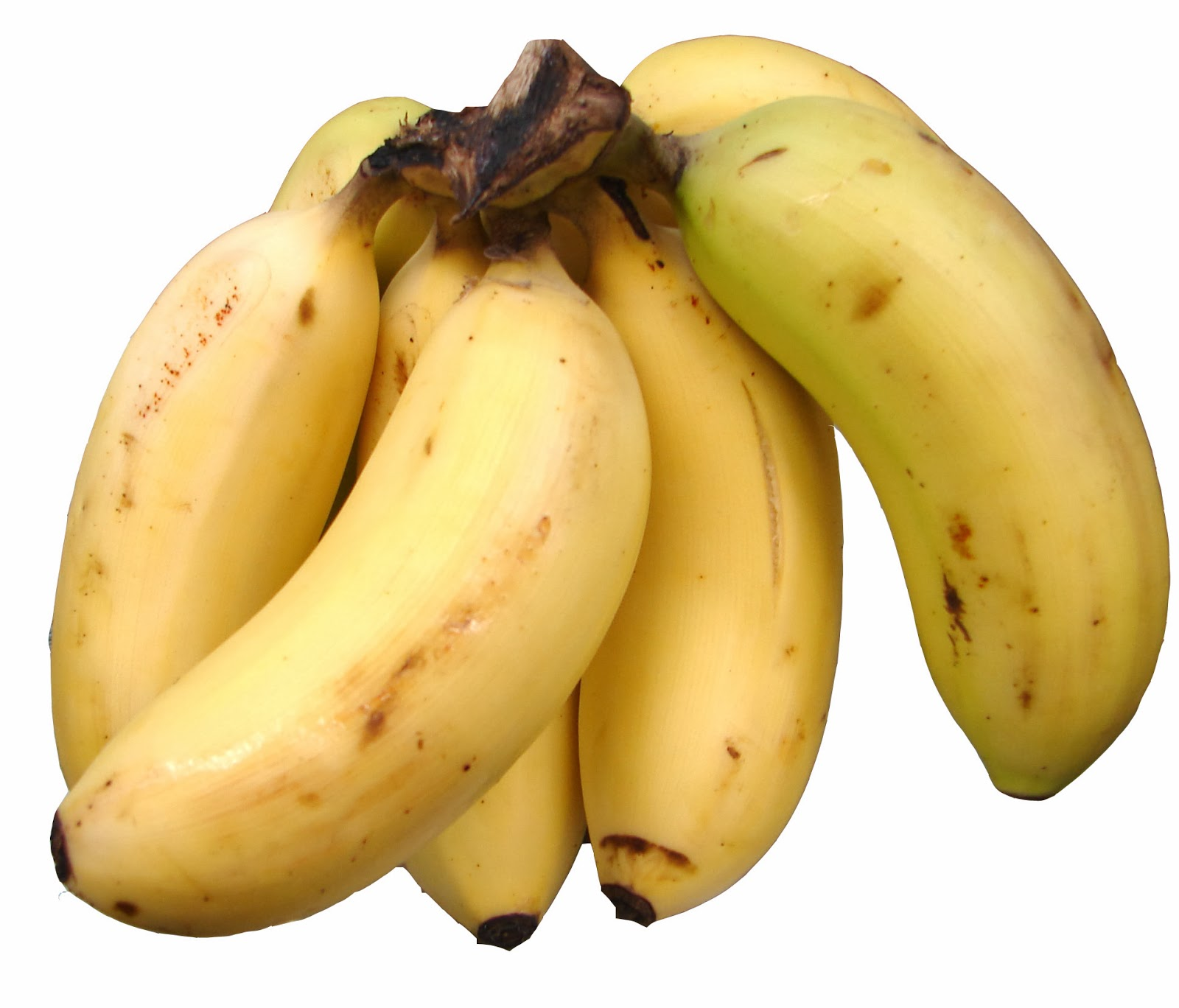 banana banana banana banana banana banana essay Free essay: chapter 1 introduction background of the study bananas are among the most widely consumed fruits on the planet and, according to the us.